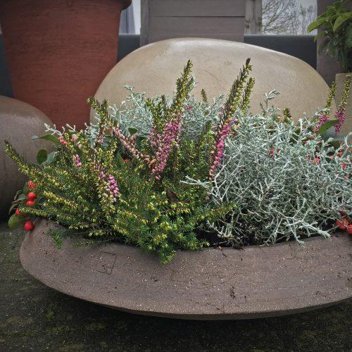Schaal met wintergroene beplanting - Atelier Vierkant